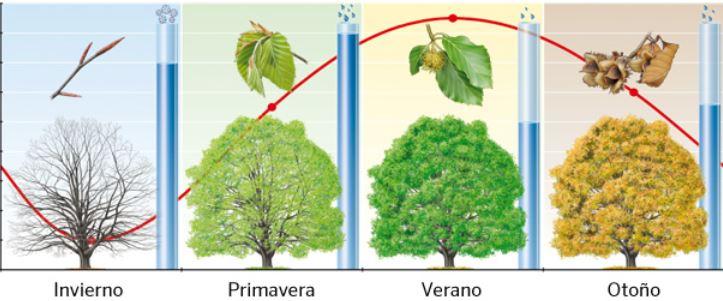 Relación de las Plantas 5ºA Prim